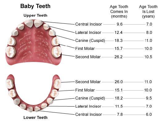 اهمیت دندان های شیری