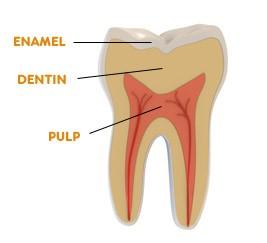 ترمیم و احیای مینای دندان